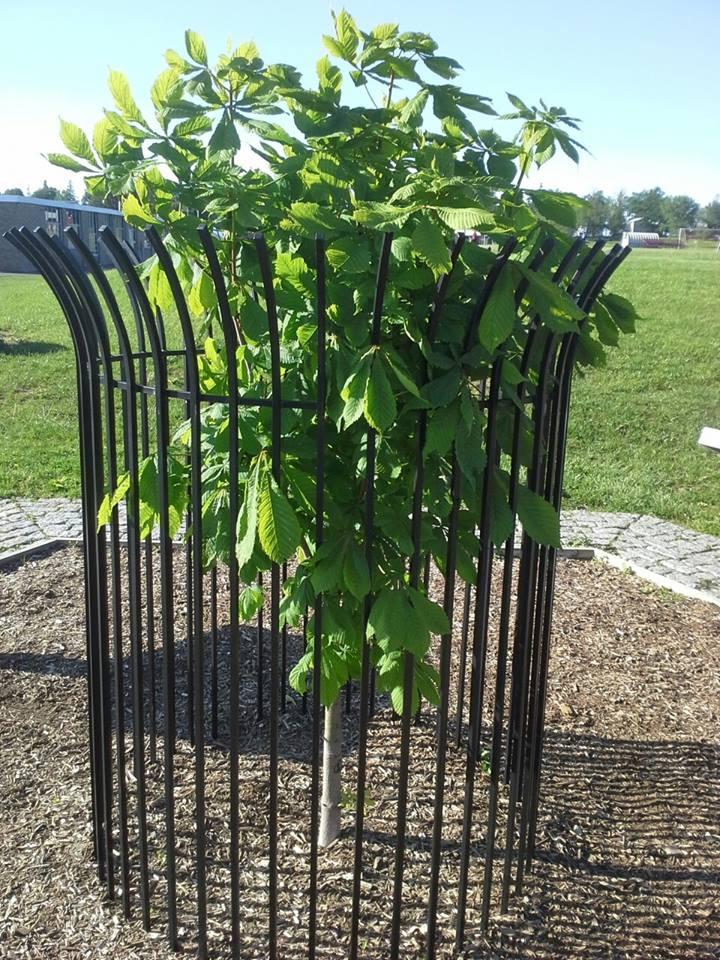 current tree